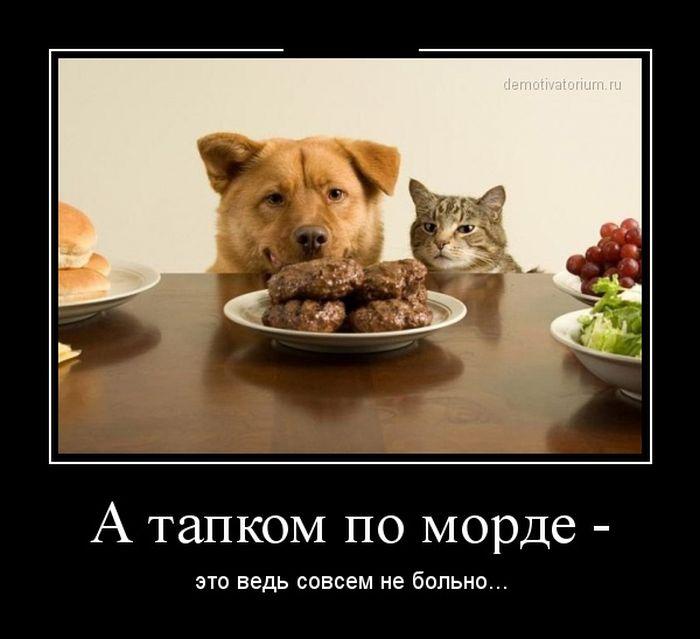 http://cn13.nevsedoma.com.ua/photo/241/1/demotivo.jpg