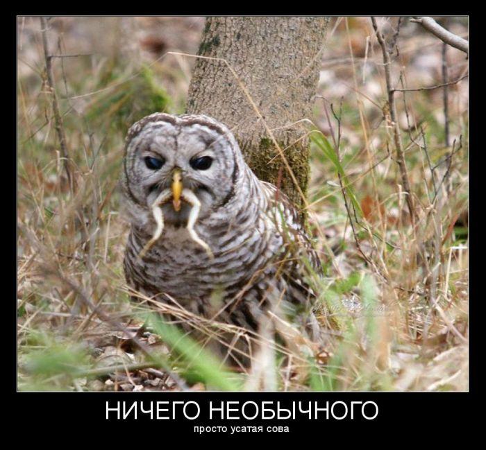 http://cn13.nevsedoma.com.ua/photo/241/1/demotivv.jpg
