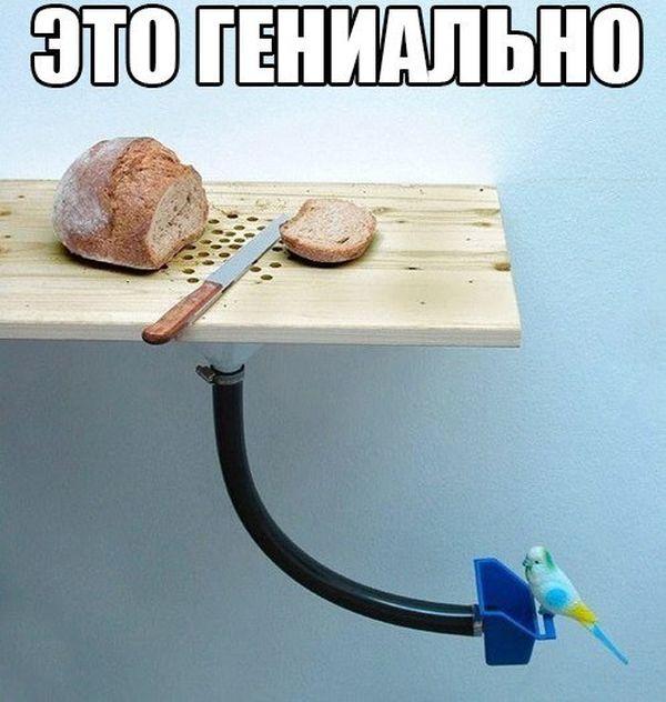 http://cn13.nevsedoma.com.ua/photo/244/1/podborl6.jpg