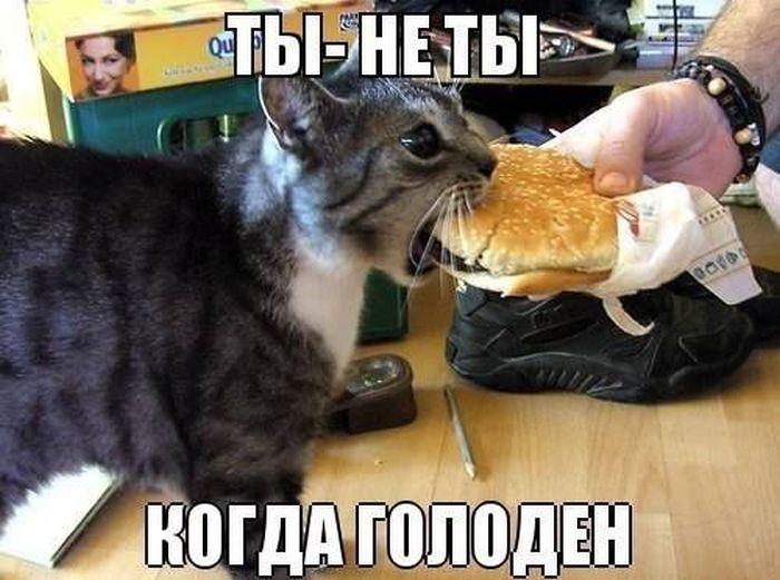 http://cn13.nevsedoma.com.ua/photo/244/1/podborlX.jpg