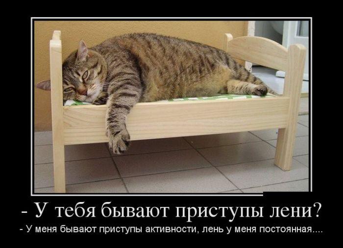 http://cn13.nevsedoma.com.ua/photo/259/1/demotivd.jpg